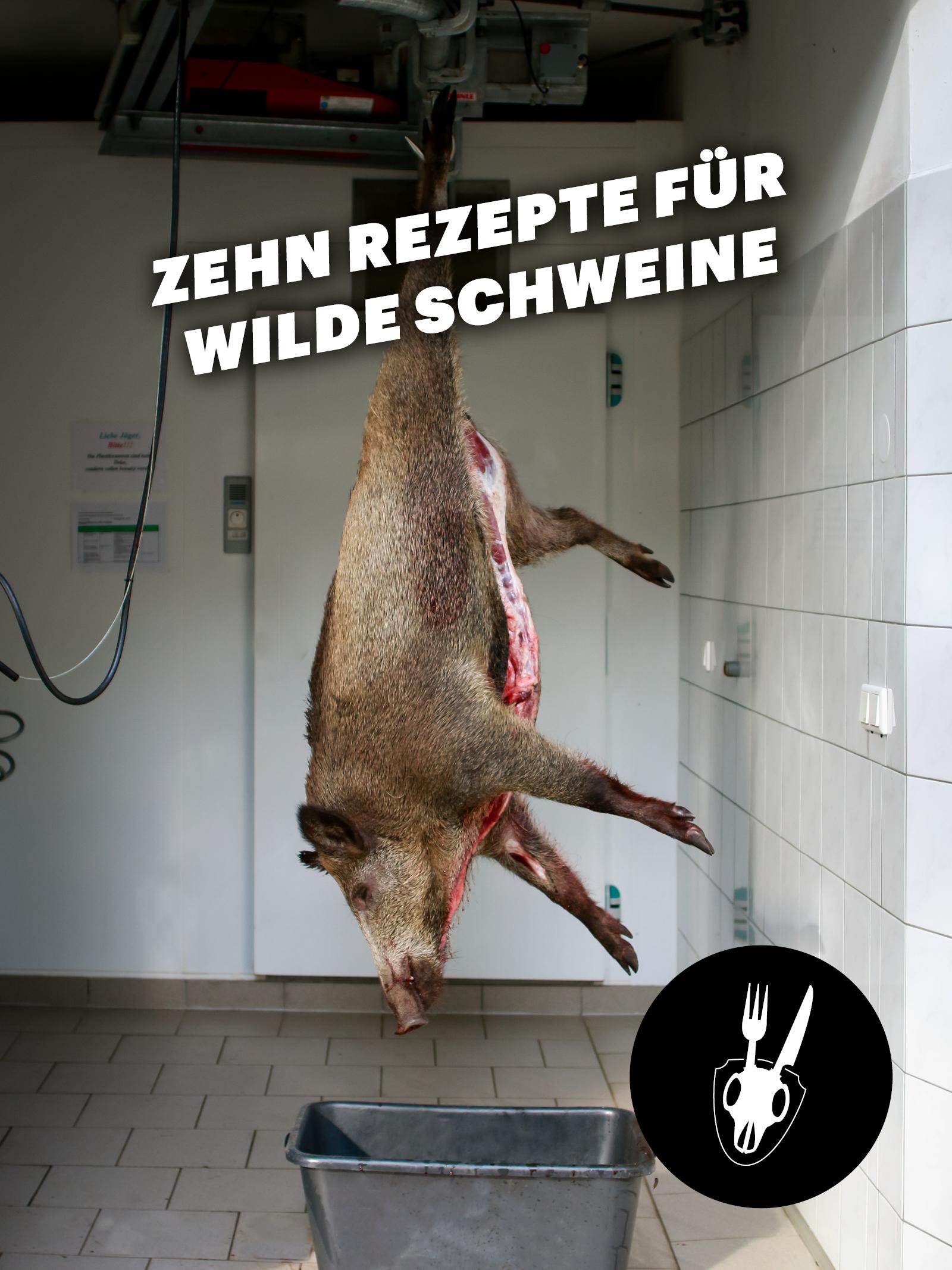 Wildschwein, Schwarzwild, Rezept, Zubereitung, Afrikanische Schweinepest,