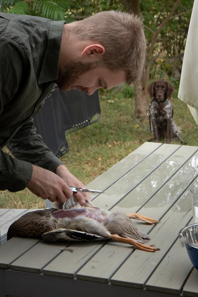 Ein Jagdhund hat eine Ente gefangen